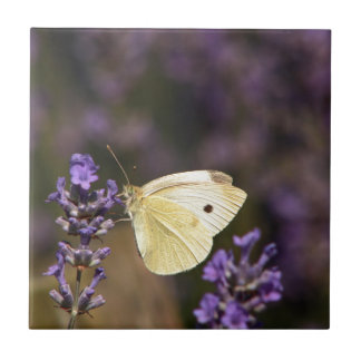 Butterfly on lavender tile