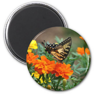 Butterfly on Orange and Yellow Flowers Magnet