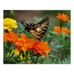 Butterfly on Orange and Yellow Flowers Poster