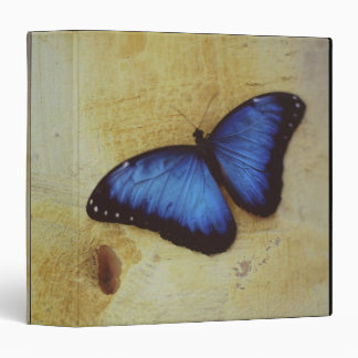 Butterfly on painted surface of woman's stomach vinyl binders