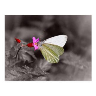 Butterfly On Pink Flower Postcard