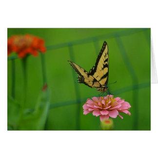 Butterfly On Pink Zinnia Notecard