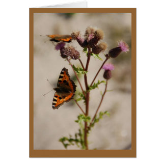 Butterfly on Plant Note Card