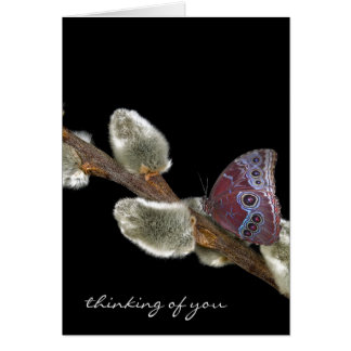 butterfly on pussy willow card