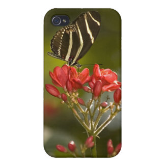 Butterfly on Royal Poinciana iPhone 4/4S Cases