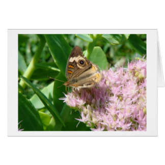 Butterfly On Sedum, Sparkle & Light Card