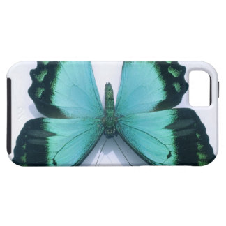 Butterfly on white iPhone 5 cover