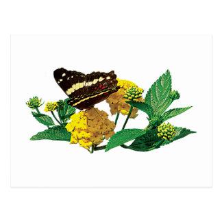 Butterfly on Yellow Lantana Postcard