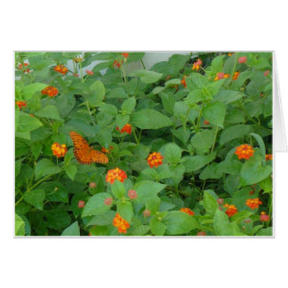 Butterfly Orange and Red: A Search and Find Birthd Card