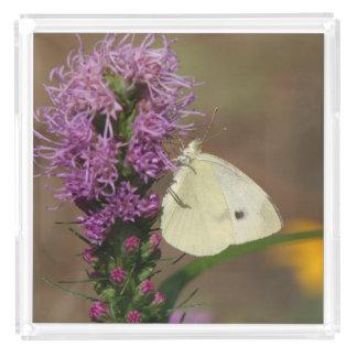 Butterfly, Perfume Tray. Perfume Tray