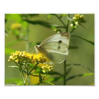 Butterfly, Photo Enlargement.