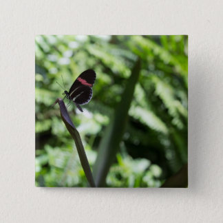 Butterfly Photography 2 Inch Square Button