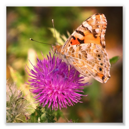 Butterfly Photography Photo Print , Pink Thorn