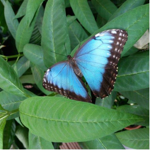 Butterfly Photo Sculpture