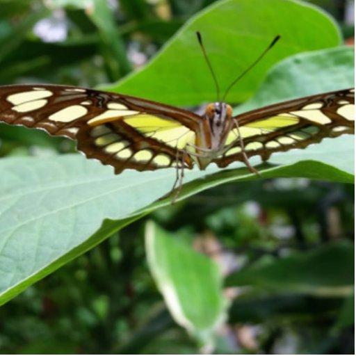Butterfly Photo Cutouts