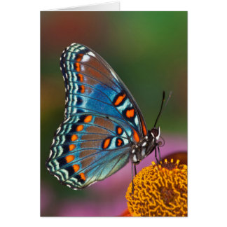 Butterfly profile on a flower card