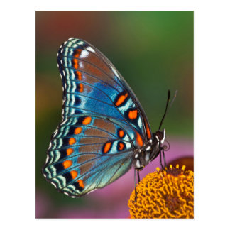 Butterfly profile on a flower postcard
