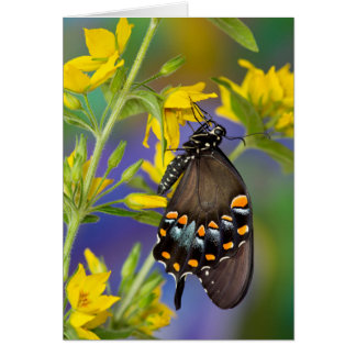 Butterfly profile on yellow flower card