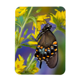 Butterfly profile on yellow flower rectangular photo magnet