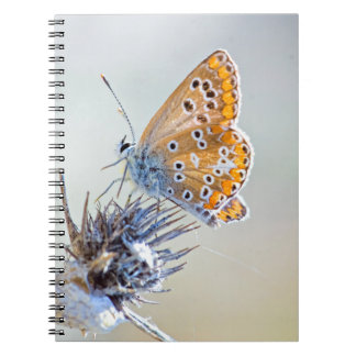 Butterfly putting on bluish pointed leaves spiral notebook