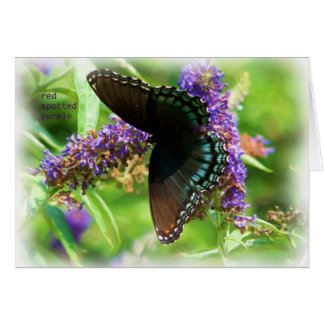 butterfly_red_spotted_purple_0233_Paint Card