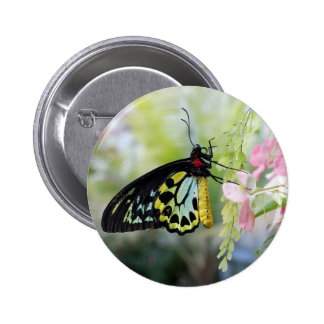 Butterfly Resting Button