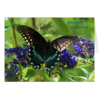 butterfly_spicebush_1769x_Paint Card