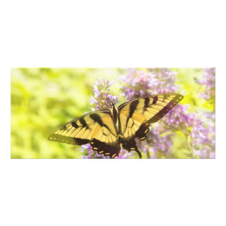 Butterfly - Swallowtail - Hard to swallow Rack Card Template