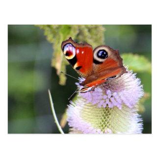 Butterfly: Tagpfauenauge Postcard
