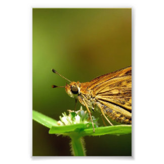 Butterfly Tamil Grass Dart with Bokeh Background. Art Photo