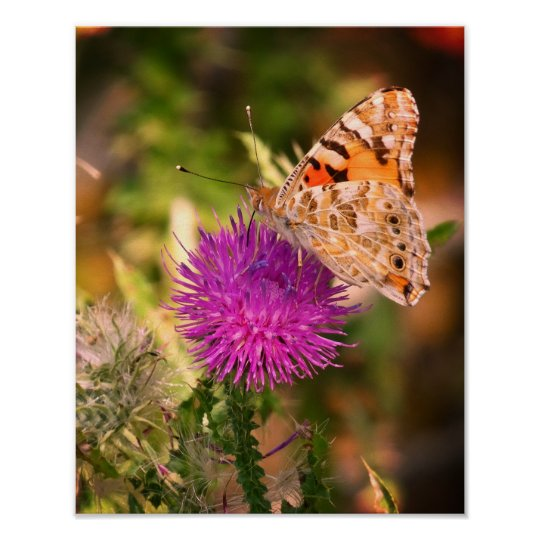 Butterfly Thorn Photography Print