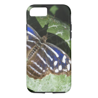 Butterfly Up Close iPhone 7 Case