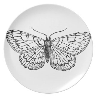 butterfly vintage illustration plate