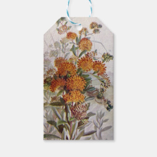 Butterfly Weed Botanical Wildflower Gift Tags