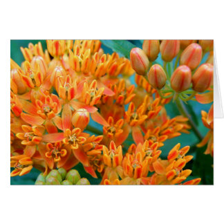 Butterfly Weed Note Card