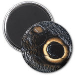 butterfly wing refrigerator magnet