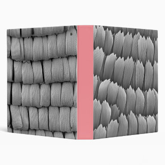 Butterfly wing scales Binder