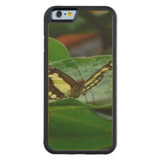 Butterfly Carved® Maple iPhone 6 Bumper Case
