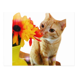 """Butters Says Hi"" Cute Cat Postcard"