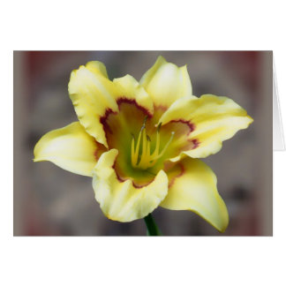 Buttery Yellow on Grey - Daylily Card