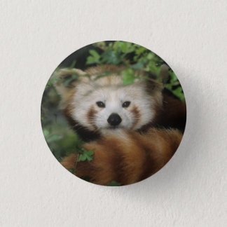 Button - red panda