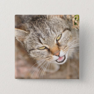 Button - square featuring this sweet kitty