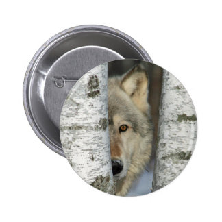 Button with photo of gray wolf in some birch trees
