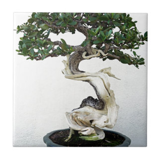 Buttonwood Bonsai Tree Tile