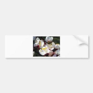 Buzz'n Blossoms Bumper Sticker