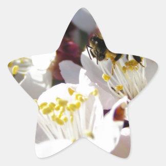 Buzz'n Blossoms Star Sticker