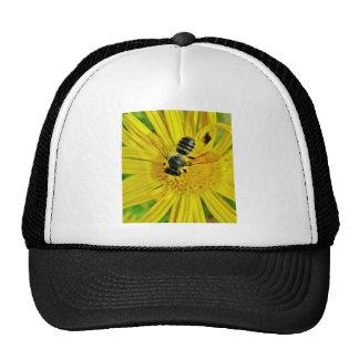 buzzzzz casquette