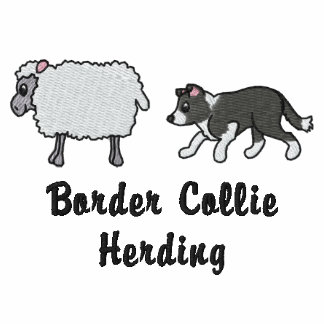 BW Border Collie Herding