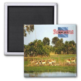 BW - Botswana - Group of Female Lechwe Square Magnet