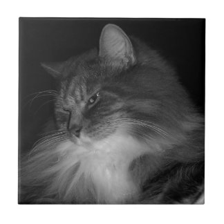 BW Cat Photo of Simba Tile